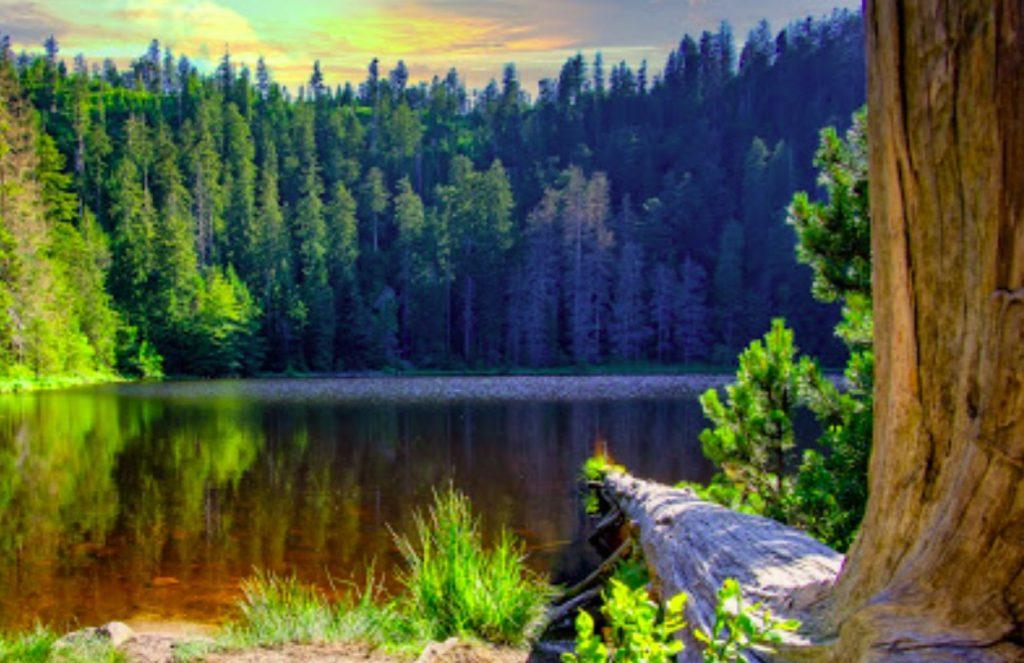 Le parc national de la Foret Noire